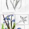 Siberian Squill by Sung Hyo Kim '11