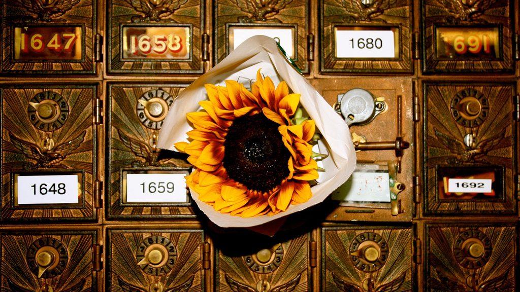 A sunflower in a mailbox