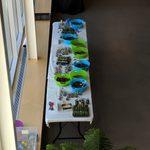 Succulent Creation Station