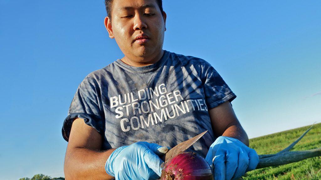 Farmer cutting into a beet