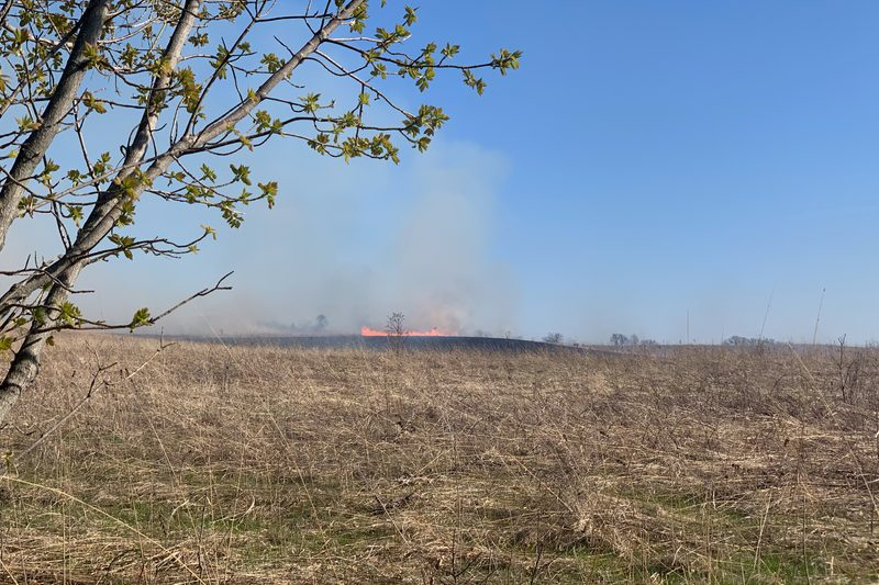 A controlled burn deep in the Arboretum