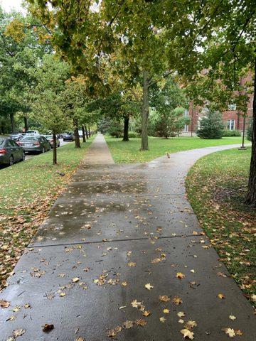 Sidewalk after rainy day.