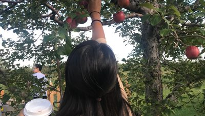Girl picks apples.