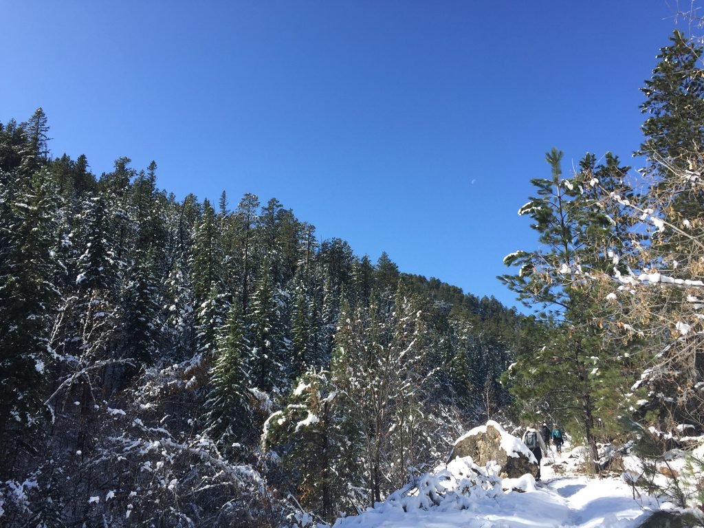 snowy pine forest with sky and moon