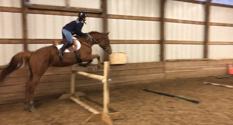 horse jumping indoors