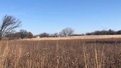 arb field