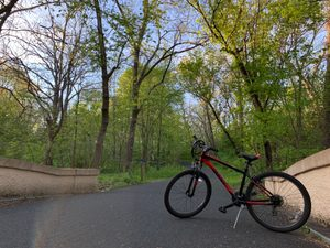 bike and forest