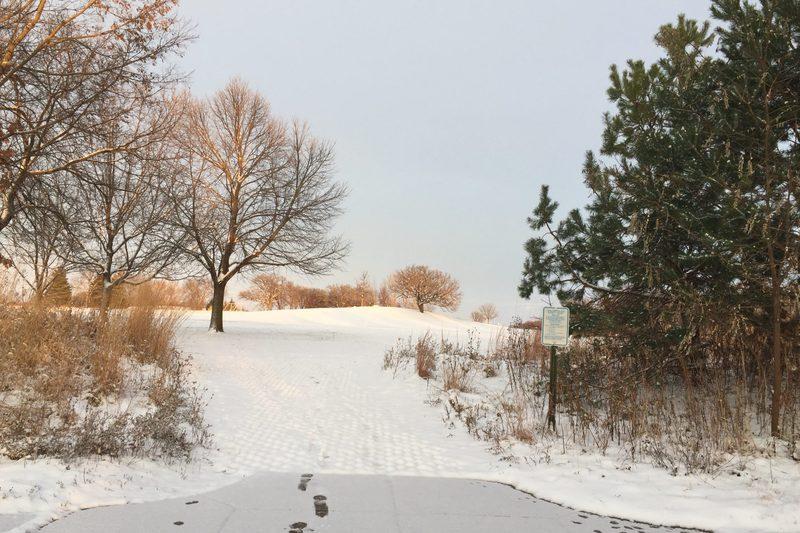snowy arb