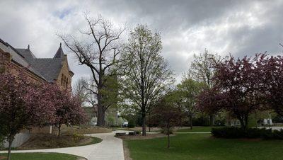 Carleton Trees Blooming
