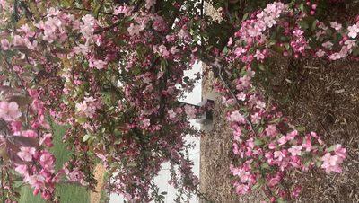 Nourse tree