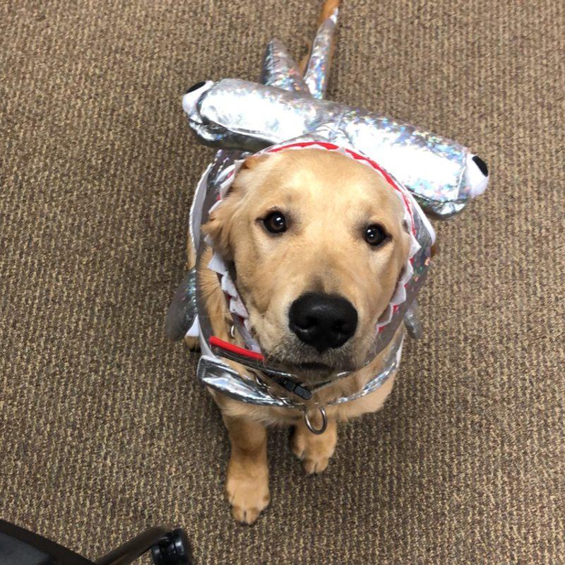 swa dog in costume