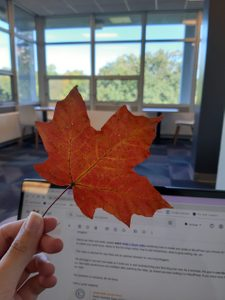 The first fall leaf I picked, pictured while I was working in Myers' lounge.