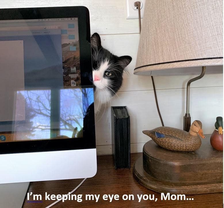 A cat peers from behind a computer monitor
