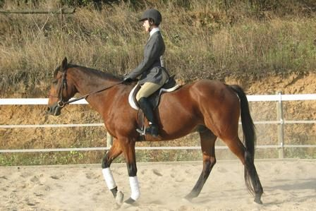 Equestrian Club Member in competition