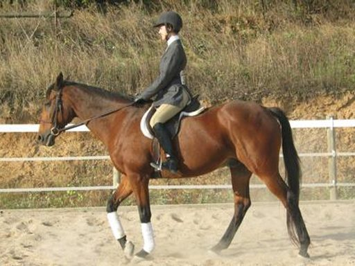 Equestrian Featured