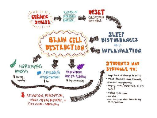 brain cell destruction diagram