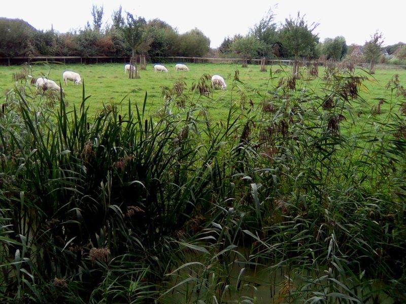 Dutch countryside near Utrecht