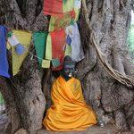 A statue perches on the edge of a massive tree