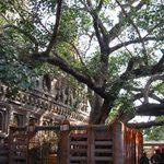 a large, sprawling tree