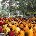 A large group of yellow-clad monks gather outdoors