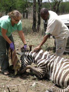 Director Anna Estes with a zebra
