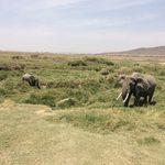 Elephants in Serengeti National Park