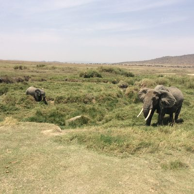 Elephants in Serengeti National Park