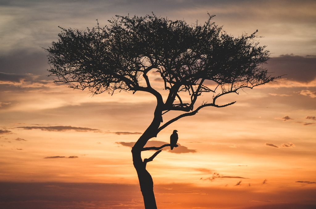 Bird on tree as the sun sets in the background