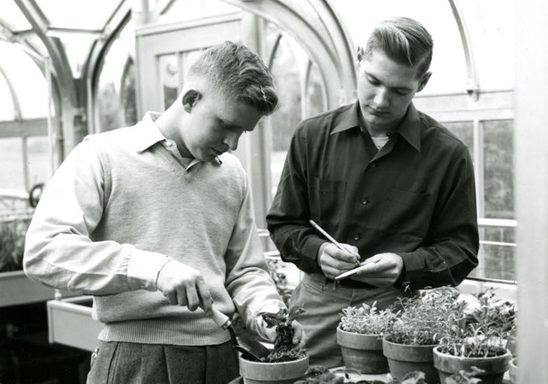 Two students work with plants for a botany lab in 1951.