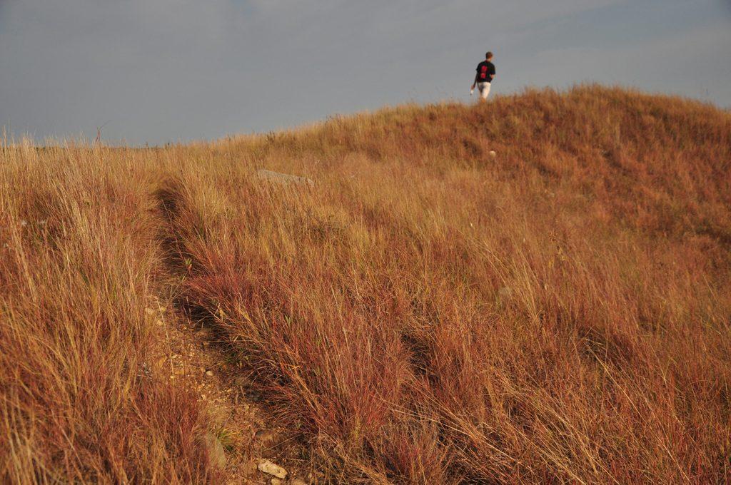 Fall at McKnight Prairie
