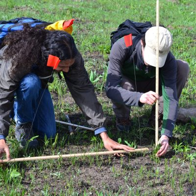 Students measure plant heights in the Arboretum.