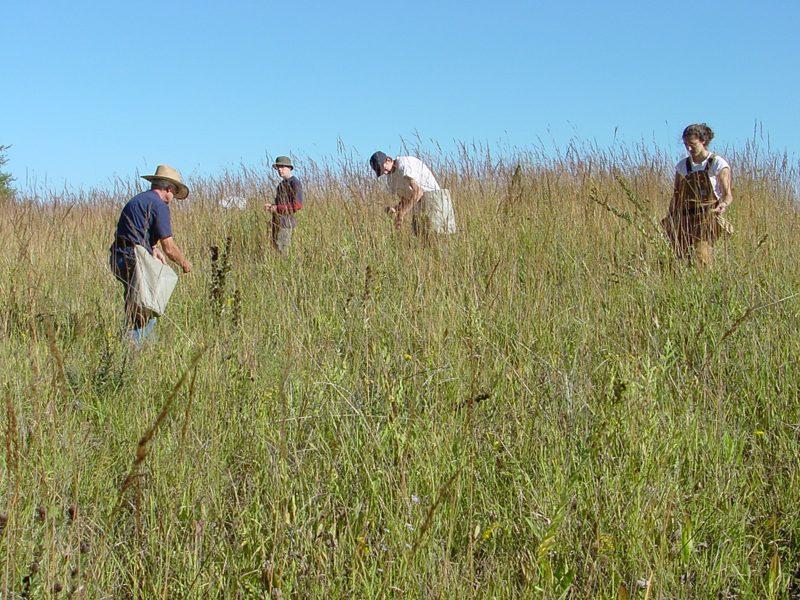 Arboretum crew collecting prairie seeds.