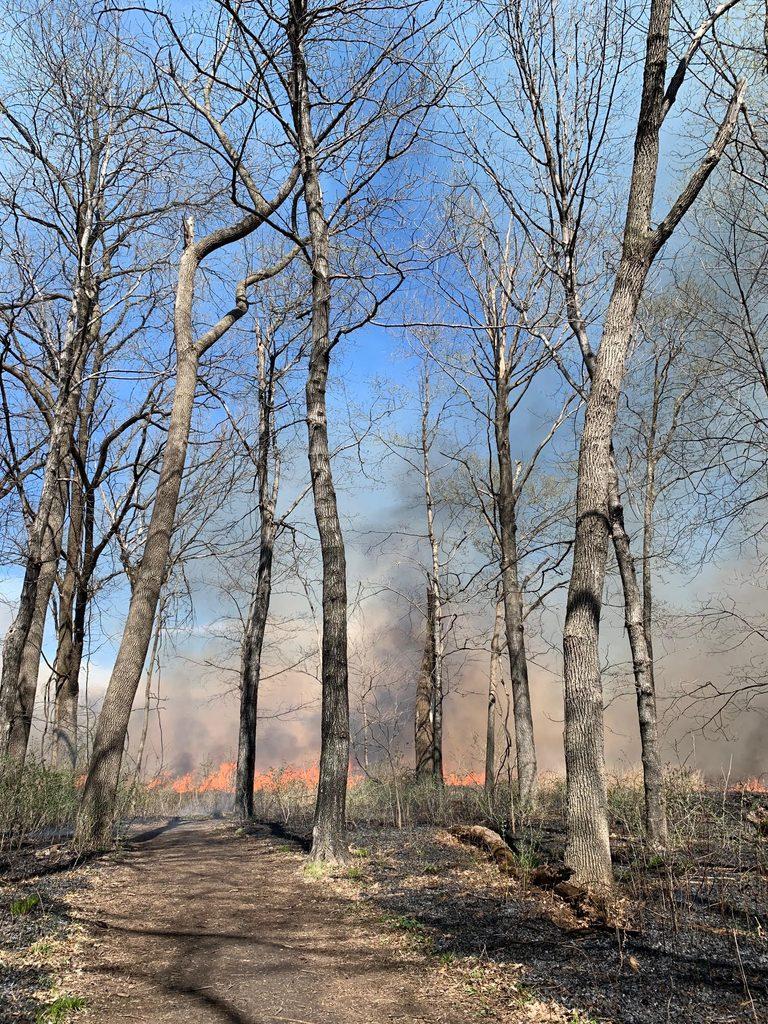 Springtime burn in lower Arb