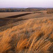 McKnight Prairie, 1980