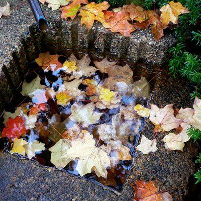 Autumn Leaves in the Japanese Garden
