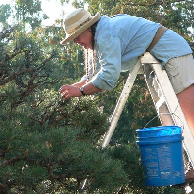 Pruning Trees in the Japanese Garden