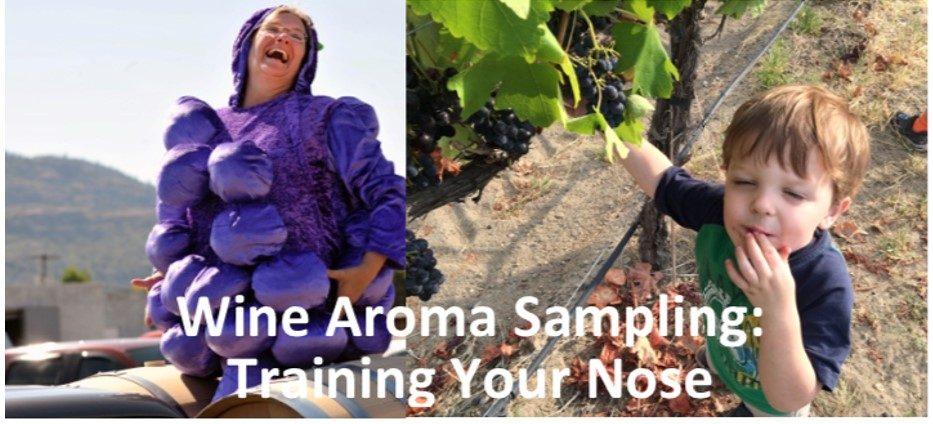 Wine Aroma Sampling