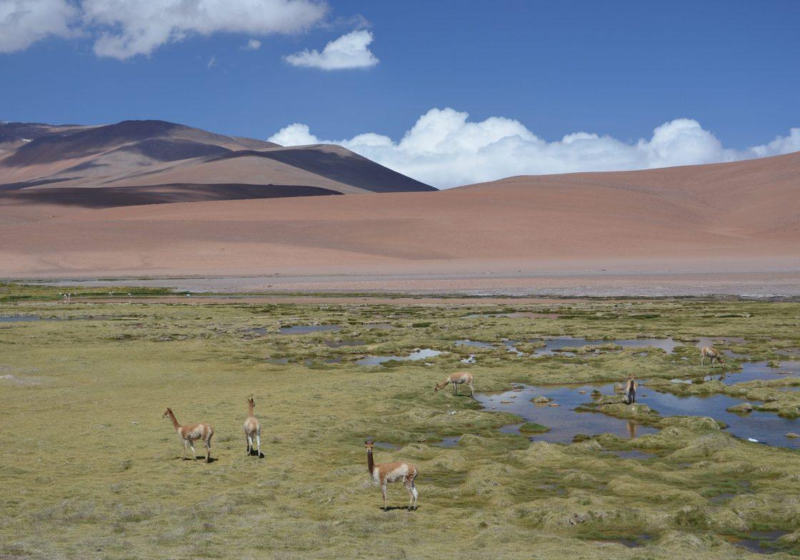 San Pedro de Atacama (High Andes)
