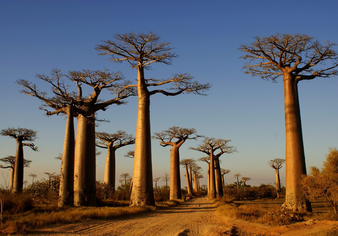 Avenue of the Baobabs © Tourist Board