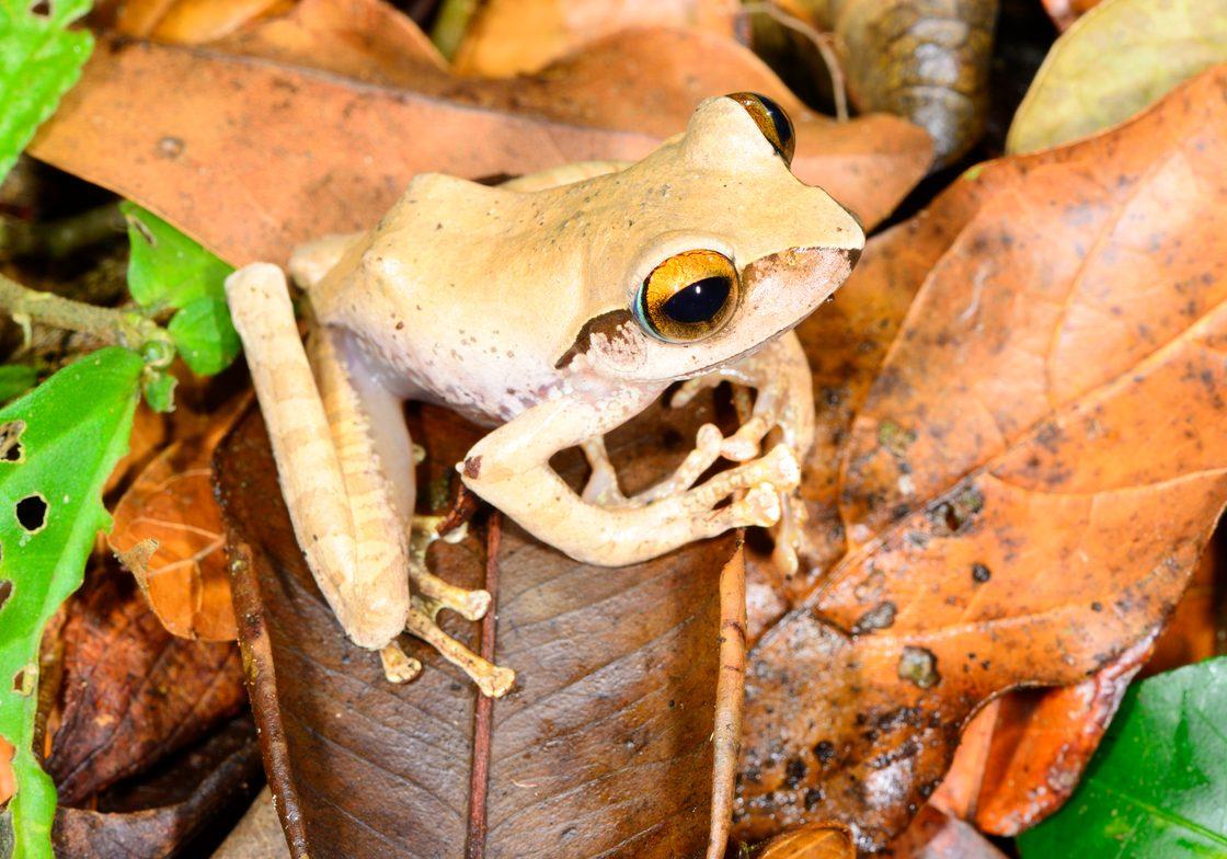 Frog © Mark D. Scherz