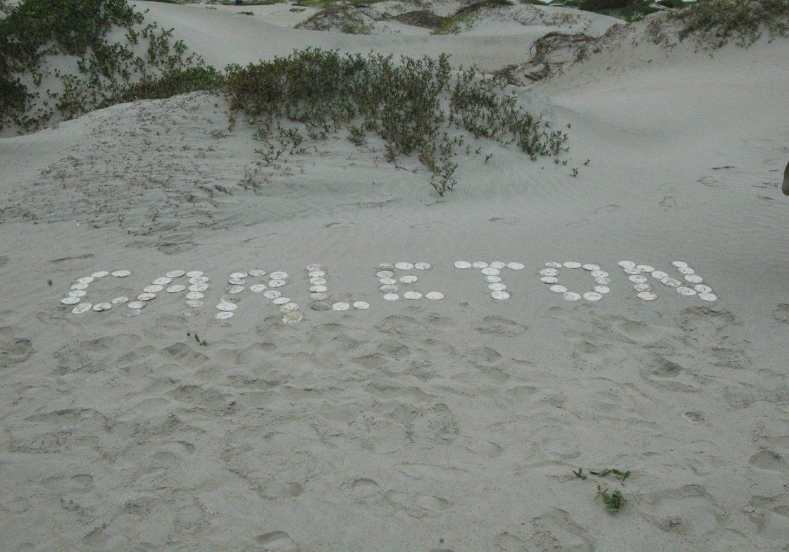 Sand Dollar Carleton