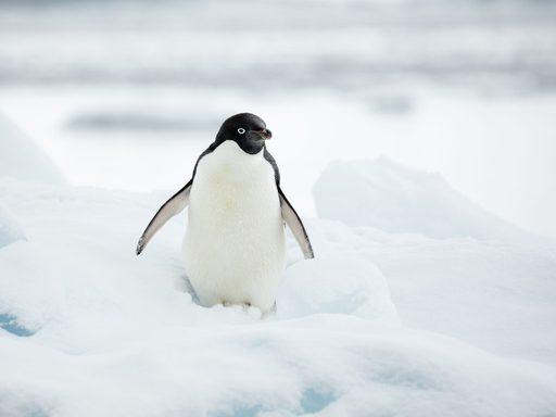 Alumni Adventures, Expedition to Antarctica