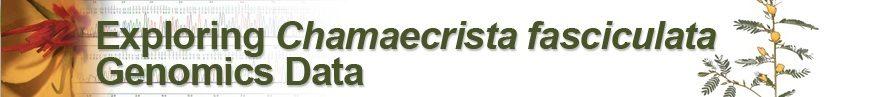 Chamaecrista Explorer Chrome