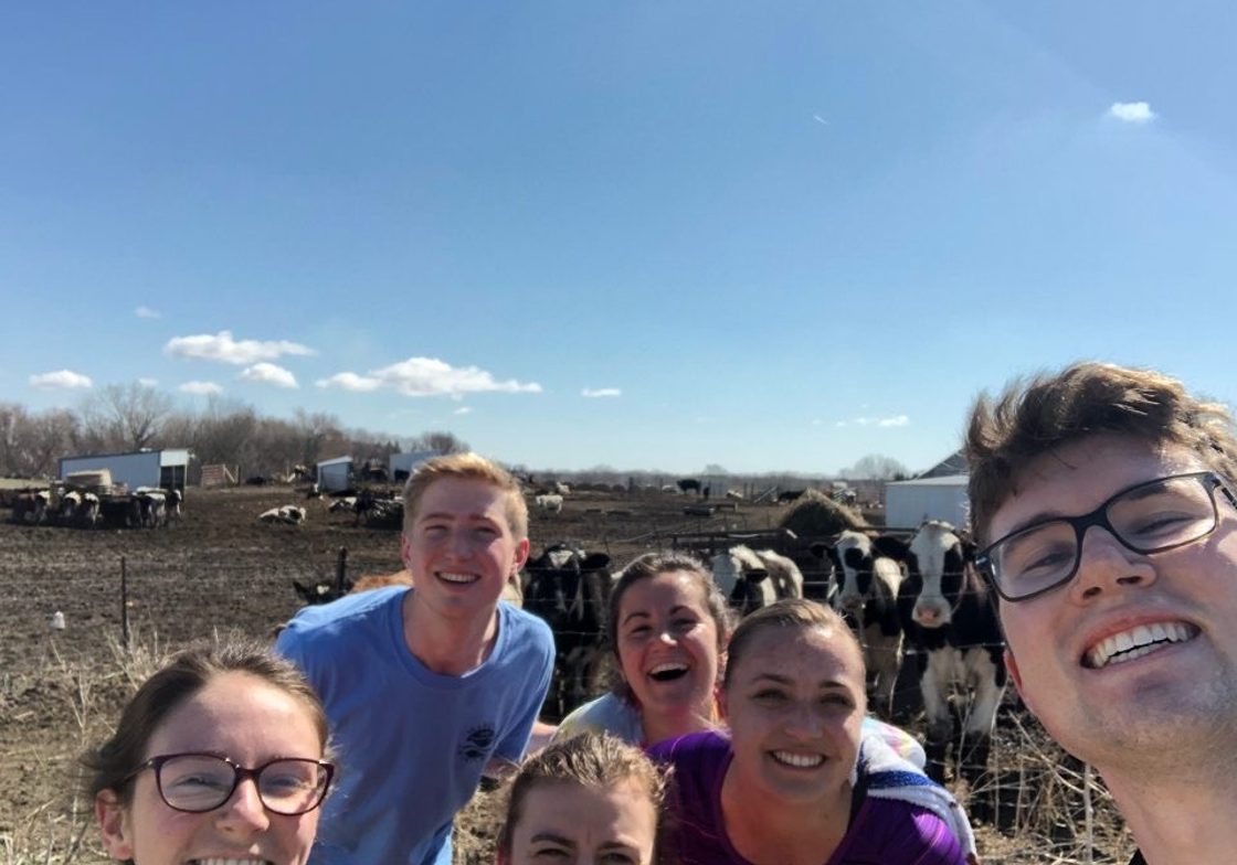 We found cows!