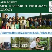 Harvard Forest Summer Research