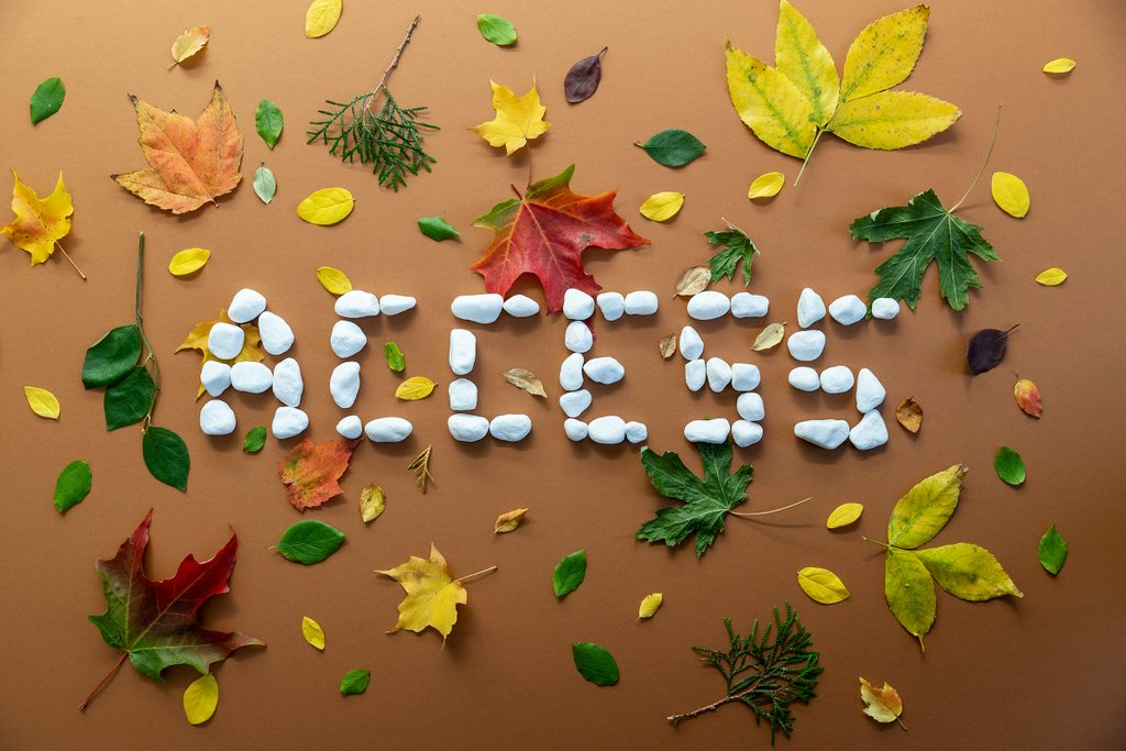 "photo illustration: the word ""access"" spelled out with rocks surrounded by colorful leaves"